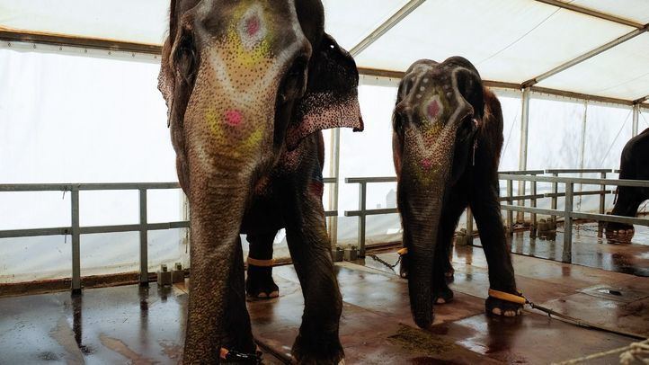 Elefantes de un circo.