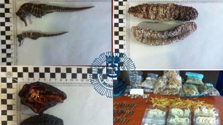 Algunas muestras de las especies requisadas por los agentes en el local.