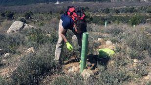 Voluntarios de BBVA realizado labores de reforestación en el Parque Regional de la Cuenca Alta del Manzanares, en Navacerrada.
