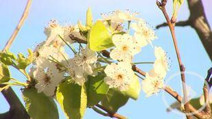 La alergia a gramíneas será menos intensa esta primavera