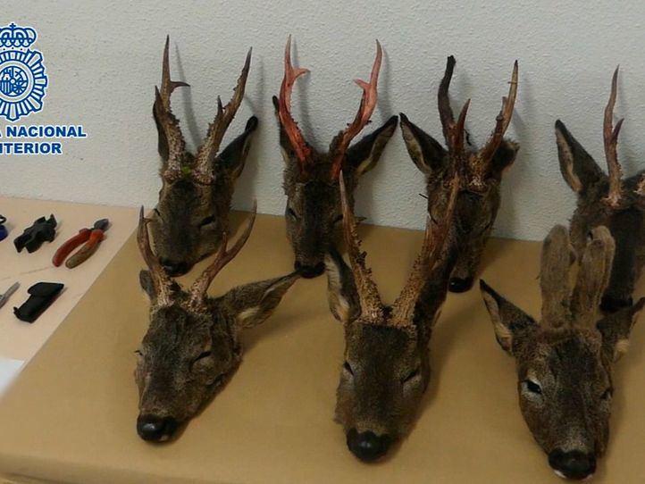 Dos furtivos, detenidos con siete cabezas de corzo