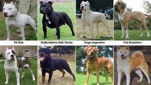 Listado de las razas de perro consideradas potencialmente peligrosas