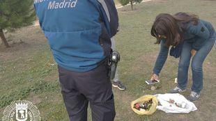 La Policía Municipal busca al responsable de haber colocado en un parque de Barajas hasta una veintena de salchichas con alfileres y cristales, sospechoso de un delito continuado de maltrato animal