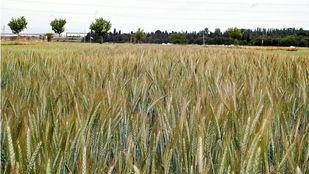 Campos madrileños. Agricultura