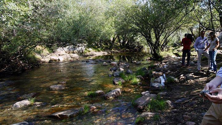 Riachuelo en la Pedriza del Parque Natural del Guadarrama