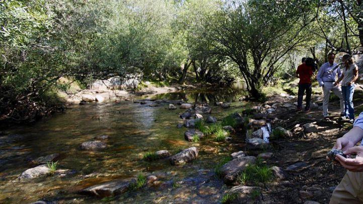 Talleres y rutas gratuitas para conocer la naturaleza de Madrid