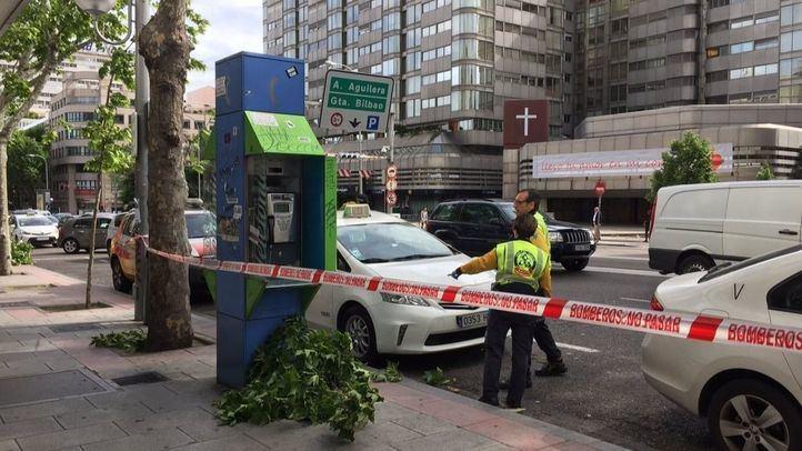 El fuerte viento ha provocado el desprendimiento de una gran rama de un árbol que se encuentra a la altura de una parada de taxis de la calle Princesa.