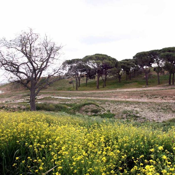 El parque central de Valdebebas comenzará sus obras