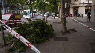 El fuerte viento provoca la caída de ramas de árboles