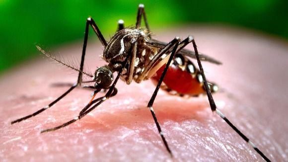 El mosquito tigre causa problemas a los vecinos de Velilla cada verano desde hace más de una década.