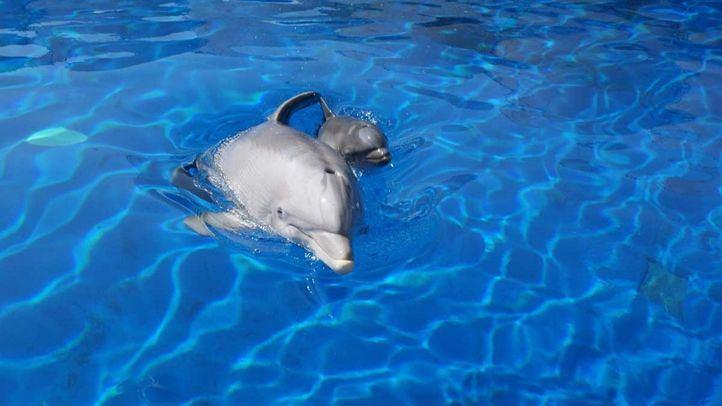 Seprona investiga un presunto maltrato a los delfines del Zoo de Madrid
