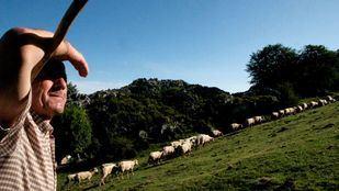 La Escuela de Pastores de la sierra de Madrid pretende fomentar el oficio en las zonas rurales.
