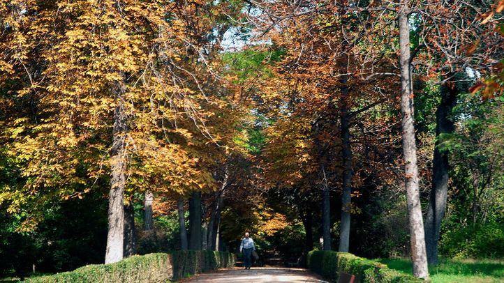 El estudio evalúa el efecto que produce la presencia de un parque urbano en las concentraciones de partículas contaminantes en la parte baja de la atmósfera.