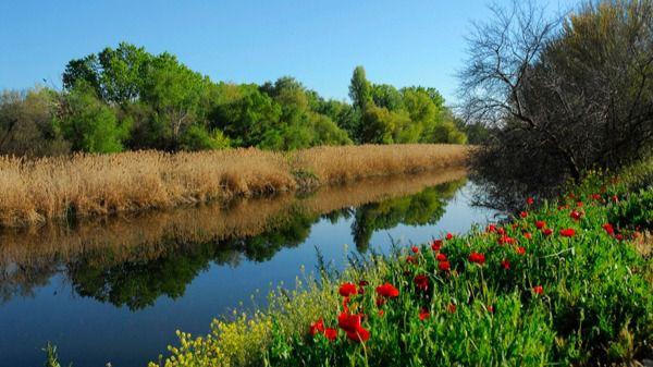 El río Jarama, uno de los 12 puntos críticos de España en cuanto a contaminación