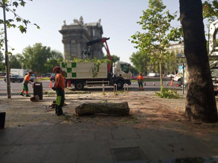 La caída de un árbol obliga a desalojar la terraza de Ramsés y otros efectos de la tormenta