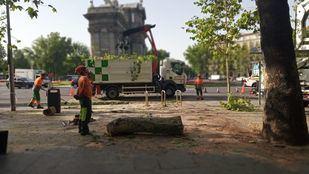 Los operarios del Ayuntamiento terminaban ya en la mañana del lunes de retirar los restos del árbol en la Plaza de la Independencia.