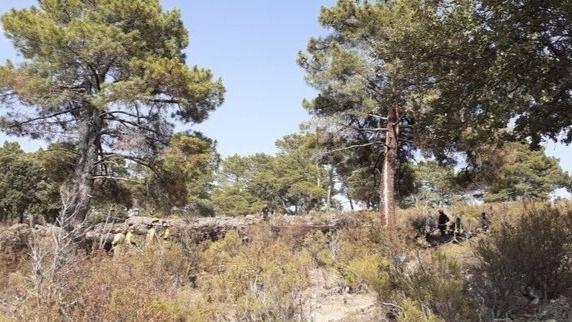Conato de incendio por la caída de un rayo en un pino en Robledo de Chavela