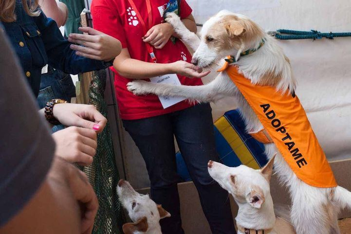 Hacia una región 'Petfriendly': 6.249 animales adoptados frente a 4.313 abandonados