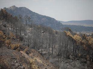 Comienzan los trabajos de recuperación en la zona afectada por el incendio de Cadalso