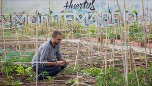 Bankia y Montemadrid ceden huertos urbanos a entidades sociales