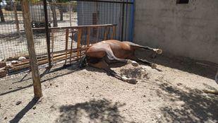 Desmantelado un local con un caballo muerto en Getafe