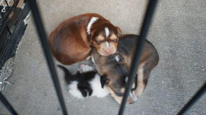 Imagen de los cachorros de perro y gato recuperados por la Policía local de Getafe.
