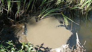 La contaminación de las aguas del Guadalix, a la Fiscalía