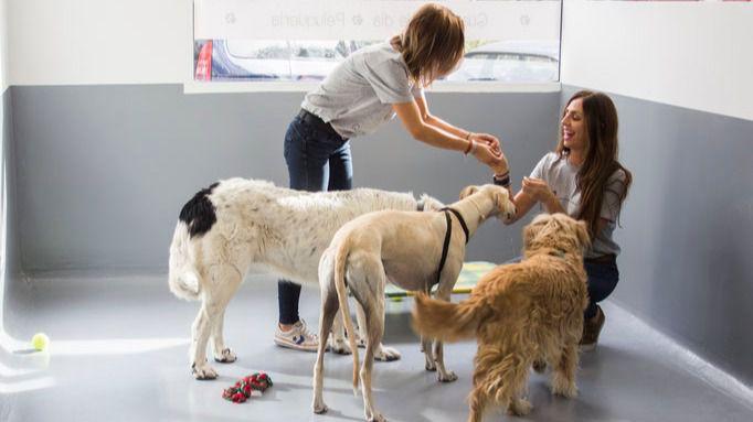 Guarderías caninas: el segundo hogar de los amigos peludos