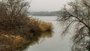 El pie seccionado fue encontrado por un grupo de adolescentes que se encontraba en la Laguna del Campillo.