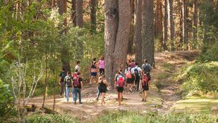 Los grupos de voluntarios baten el monte.