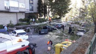 Un árbol de grandes dimensiones cae encima de varios vehículos en Herrera Oria