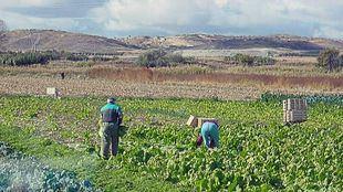 La Comunidad dará ayudas a los agricultores afectados por las tormentas