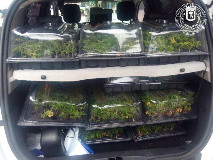 Detenido por transportar 1.130 plantas de marihuana