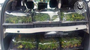 La furgoneta del detenido, repleta de plantas de marihuana.