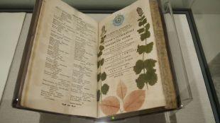 Regnum vegetabile: las curiosidades de la ciencia en el Jardín Botánico