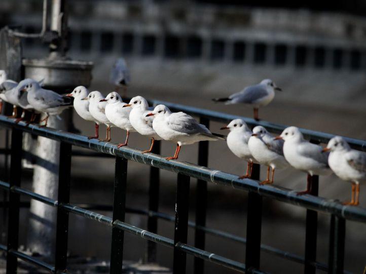 Así se celebrará el Día de las Aves en Madrid