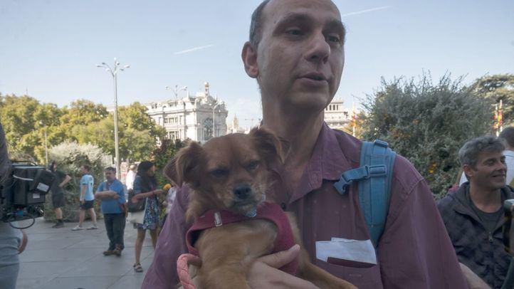 Las mascotas de los 'sin techo' del Paseo del Prado, desamparadas