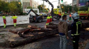 La caída de un árbol corta durante horas la Castellana