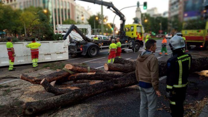 La caída de un árbol de 15 metros provoca el corte del tráfico en el Paseo de la Castellana.