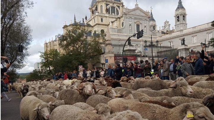 Fiesta de la Trashumancia 2019 en Madrid