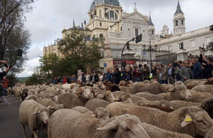 Las ovejas toman el centro de Madrid