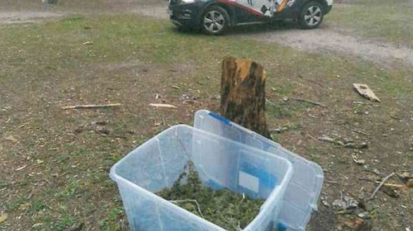 La Policía local de Getafe encuentran una caja con 6 kilos de marihuana en el Cerro de los Ángeles