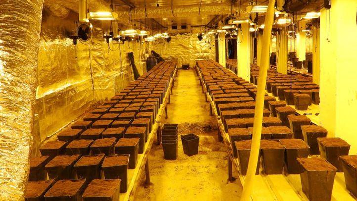 Los tres detenidos contaban con un invernadero para el cultivo de marihuana y se encontraban acondicionando otros dos
