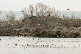 Una bandada de gaviotas inicia el vuelo.
