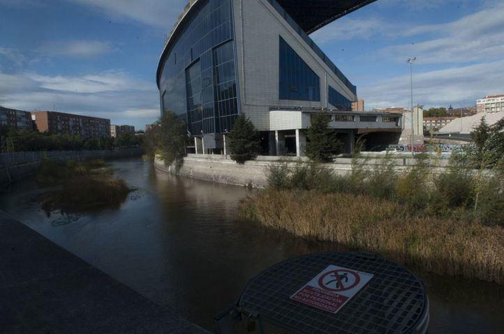 El documento de impacto ambiental de las obras de derrumbe del Vicente Calderón no cuenta con la presencia de nutrias en el río Manzanares