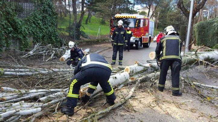 Los bomberos retiran un árbol caído por el viento