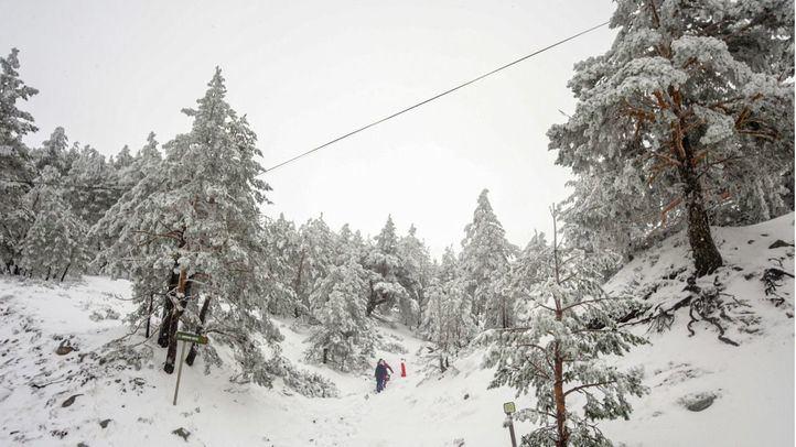 Paisaje de pinos cubiertos de nieve durante el temporal de nieve en la Sierra de Madrid, en el Puerto de Navacerrada (Madrid)