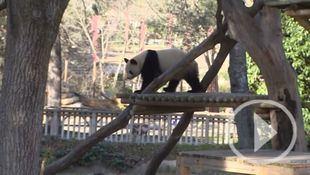 El papel de los zoológicos en materia de Biodiversidad