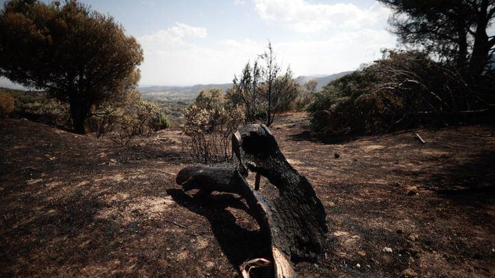 Tierra y vegetación quemada tras el incendio en Cadalso de Los Vidrios.