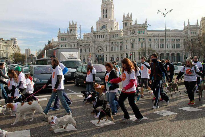 Vuelve la 'Sanperrestre' con la petición de endurecer las penas contra el maltrato animal
